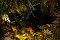 برگ روی برکه- پاییز-Floating leaves fallen from trees-ponds 02.jpg