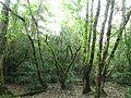 پارک جنگلی سی سنگان - panoramio.jpg