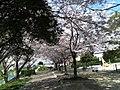グランデュール鴨川前 - panoramio (6).jpg
