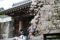 三千院御殿門の桜 (258187975).jpeg