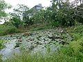 中研院生態池 - panoramio.jpg