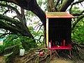 大樹公 Tree Deity - panoramio.jpg