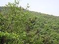山林 - panoramio (4).jpg