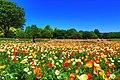 昭和記念公園 - panoramio (5).jpg