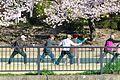 桜太極拳 (27057175882).jpg