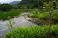 水生池 Eco Pond - panoramio.jpg