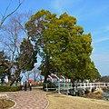 舟渡池公園にて Funato-ike Kōen 2012.3.03 - panoramio (1).jpg