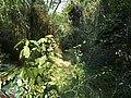 鲁谷保护区穿越3 - panoramio.jpg