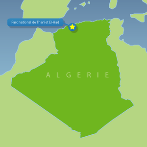 Théniet El Had National Park - Image: 0102 GM Algerian National Parks Theniet El Had National Park 01