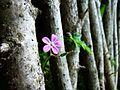 06144 Nature at Sanok Skansen.jpg