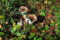 12-10-21 Dreieich Pilze 18.jpg