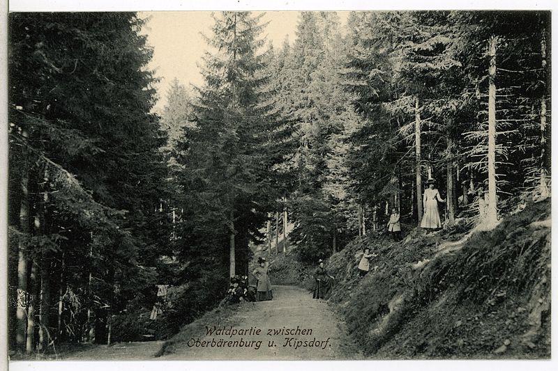 File:12944-Oberbärenburg-1911-Partie zwischen Oberbärenburg und Kipsdorf-Brück & Sohn Kunstverlag.jpg