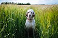 18) Fields of crops - 30 days of 35mm Art (explored) - Flickr - philhearing.jpg
