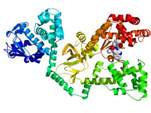 Anthrax lethal factor endopeptidase - Image: 1PWU