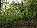 2013-05-06 18 40 00 View down the Orange Trail near the Red Trail in Point Mountain Reservation.jpg