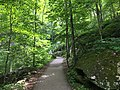 2016-05-27 13 24 10 View east along the Crabtree Falls Trail in the section of the George Washington and Jefferson National Forests within Nelson County, Virginia.jpg