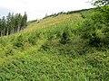 2018-08-11 (165) Nature at Tirolerkogel, Annaberg, Austria.jpg