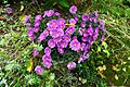 2019-09-28 Hike Stinderbachtal. Reader-50.jpg