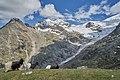 20200622 Walliser Schwarzhalsziegen vor Riedgletscher, Alpja, St. Niklaus (02109).jpg