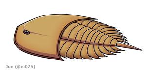 <i>Pseudoniscus</i>