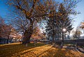 2021 The Old Mulberry in Veliki Preslav BG.jpg