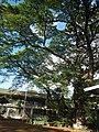 250San Mateo Rizal Landmarks Province 09.jpg