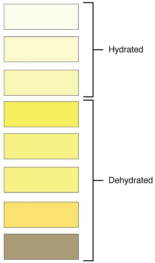 2601 Urine Color Chart