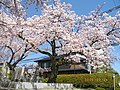 3 Chome Nakasakurazuka, Toyonaka-shi, Ōsaka-fu 561-0881, Japan - panoramio - yokoyokoi (6).jpg