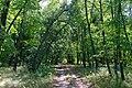 71-212-5014 Zvenyhorodka Shevchenka park SAM 2579.jpg