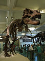 AMNH 5027 mount.jpg