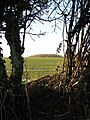 A glimpse through a field boundary hedge - geograph.org.uk - 1635036.jpg