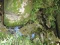 A nascente do Tietê em Salesópolis.JPG