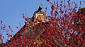 A roof with flowers - Flickr - coniferconifer.jpg