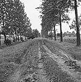 Aanleg en verbeteren van wegen, dijken en spaarbekken, zandwegen, Bestanddeelnr 161-0771.jpg