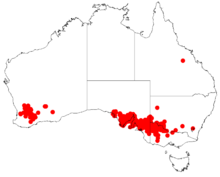 Acacia sclerophyllaDistMap797.png