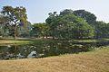 Acharya Jagadish Chandra Bose Indian Botanic Garden - Howrah 2011-01-08 9727.JPG