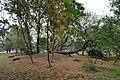 Acharya Jagadish Chandra Bose Indian Botanic Garden - Howrah 2011-02-20 1652.JPG