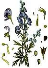 Aconitum napellus - Köhler–s Medizinal-Pflanzen-151.jpg