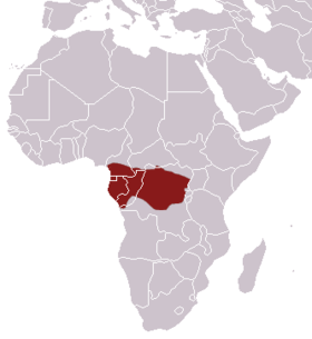 African Linsang area.png