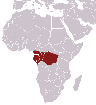 African Linsang area