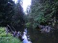 Ahja jõgi, Valgemetsa.JPG