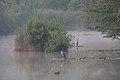 Aironi al lago Pudro.jpg