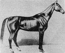 Akhal-Teke Boynou born 1885.jpg