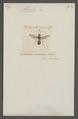 Alastor - Print - Iconographia Zoologica - Special Collections University of Amsterdam - UBAINV0274 044 02 0033.tif