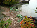 Algal bloom in Lake Erie, Kelley's Island (8740853491).jpg