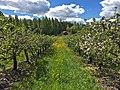 Alitalon omenaviinitila - panoramio.jpg