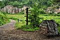 Almindingen trail.jpg