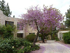Alon Shvut - Alon Shvut in spring