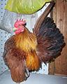 American Serama cock Azahari01.jpg
