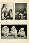 American birds, studied and photographed from life (1907) (14748097244).jpg